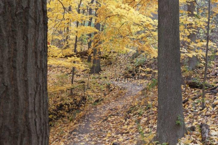 path5